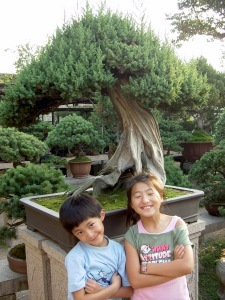 The Humble Administrators Garden - Yanmei and Daji in the Bonsai Garden
